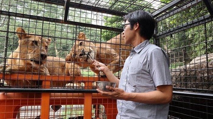 Liburan ke Taman Safari Bogor, Jangan Lewatkan Keseruan Feline Feeding Adventure