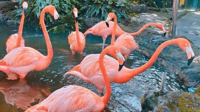 Flamingo di Jatim Park 2
