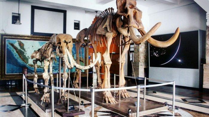 Informasi Jam Buka dan Harga Tiket Museum Geologi Bandung