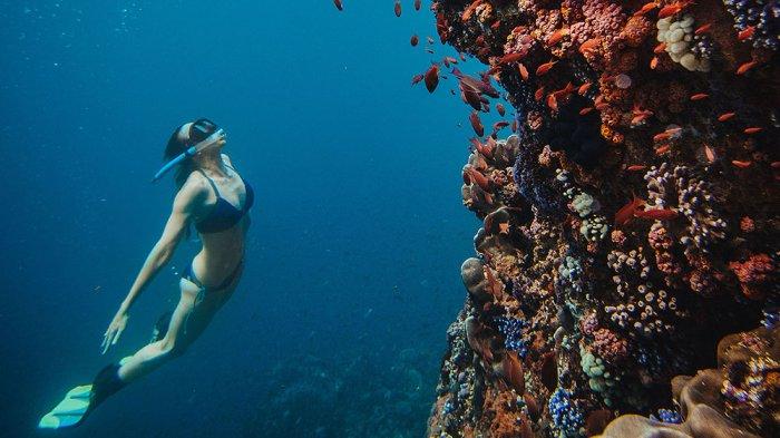 Free dive di Taman Nasional Komodo, Nusa Tenggara Timur.