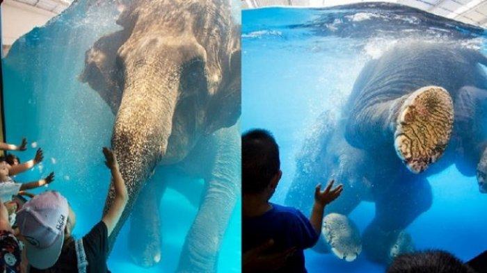 Beredar Video Pertunjukan Underwater Gajah di Thailand yang 'Kejam', Picu Reaksi Berbagai Kalangan