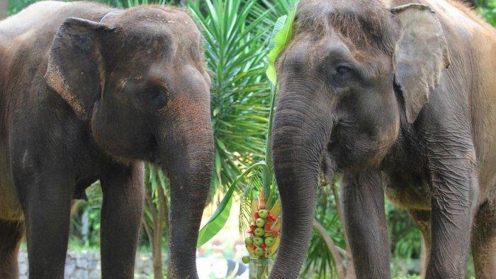 Gajah di Bali Zoo