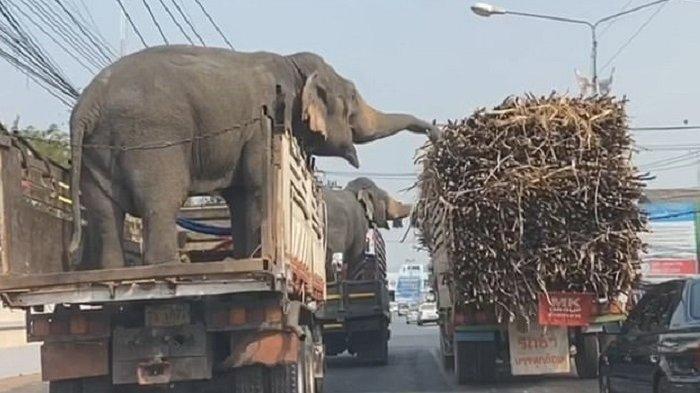 5 Kelakuan Hewan yang Sempat Viral di Medsos, Ada Gajah yang Curi Tebu