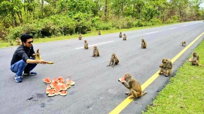 Viral di Medsos, Monyet di India Terapkan Physical Distancing saat Diberi Makan