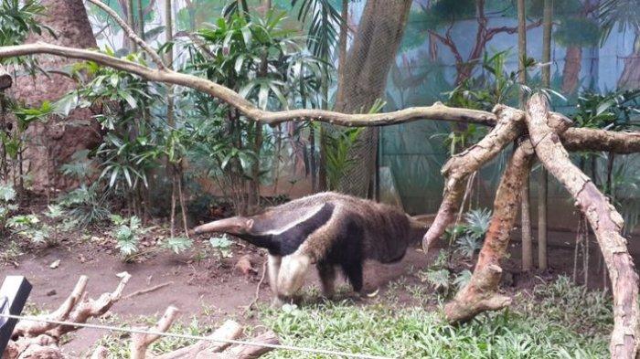 Super Langka! Ini Satwa Baru Batu Secret Zoo yang Hanya Ada di 3 Kebun Binatang Asia Tenggara