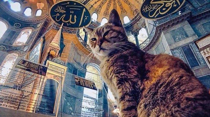 Kucing Gli yang Terkenal Tetap Tinggal di Hagia Sophia Meski Sudah Menjadi Masjid