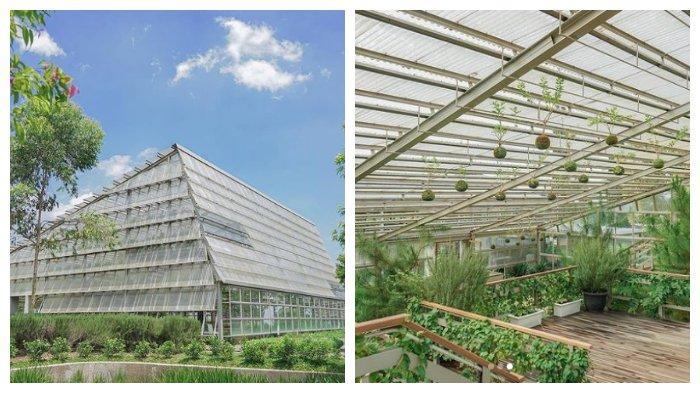 Green House Rumah Atsiri Indonesia (dari dalam dan dari luar ruangan)
