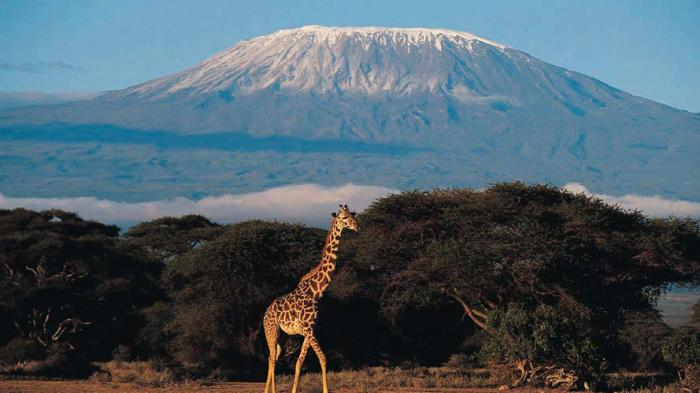 Rencana Pemasangan Kereta Gantung di Gunung Kilimanjaro Tuai Kontroversi