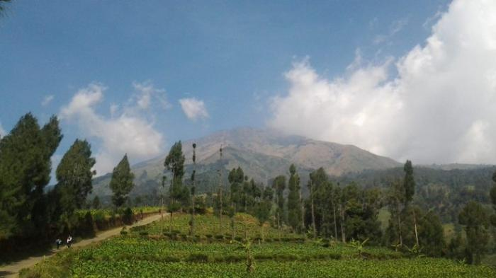 Mulai 24 Agustus, Seluruh Basecamp Gunung di Wonosobo Ditutup