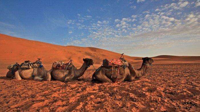 Ilustrasi - Gurun Sahara.