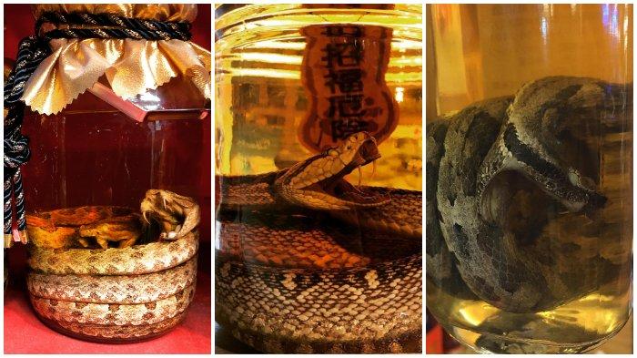Pecinta Kuliner Ekstrim? Coba Nikmati Habu Sake, Minuman Khas Jepang yang Terbuat dari Rendaman Ular