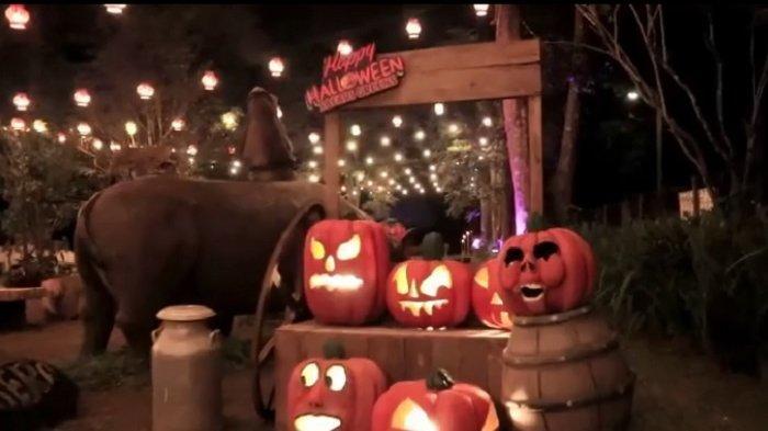 Taman Safari Bogor Gelar Acara 'Halloween Night' di Area Safari Greens, Cocok untuk Malam Mingguan