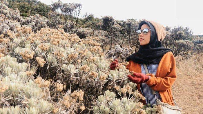 7 Gunung Di Indonesia Yang Terkenal Dengan Hamparan Edelweisnya Termasuk Gunung Pangrango Tribun Travel