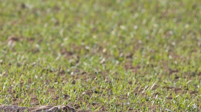 Tes Mata - Bisa Menemukan 10 Hewan yang Berkamuflase dalam Foto-foto Ini?