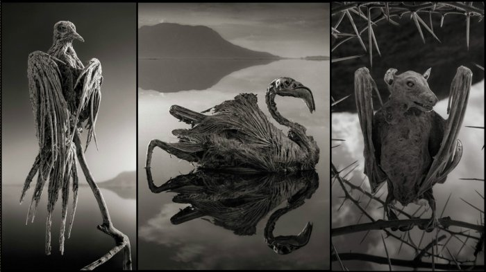 10 Destinasi Paling Berbahaya di Dunia, Danau Natron Dapat Membunuh Siapapun yang Menyentuhnya