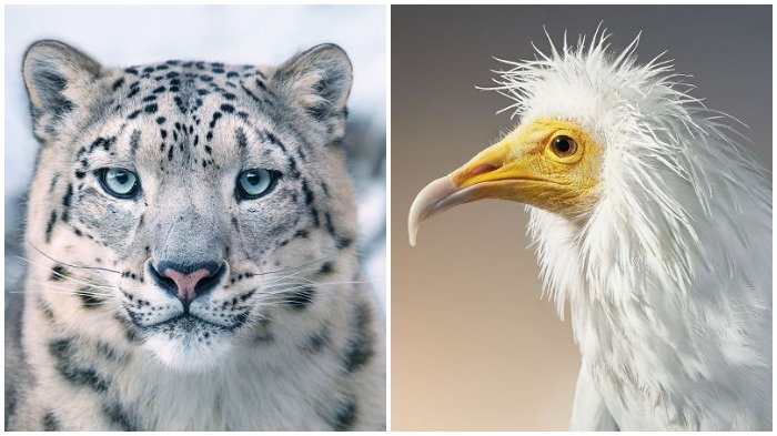 Karena Semakin Langka, Seorang Fotografer Potret 20 Binatang Terancam Punah, Hasilnya Bikin Haru!