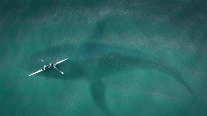 Viral Video Hiu Besar Berenang Beberapa Meter dari Pengunjung Pantai di Keem Bay