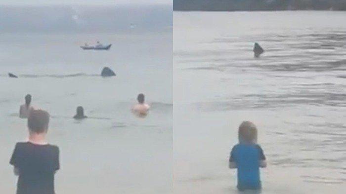 Hiu basking yang terlihat berenang di dekat pantai yang ramai pengunjung