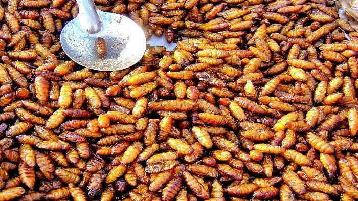 5 Kuliner Ekstrem di Jogja, Ada Daging Ular Kobra dan Tongseng Kelelawar