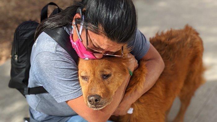 7 Tahun Hilang, Anjing di Texas Kembali dengan Selamat pada Pemiliknya Berkat Microchip