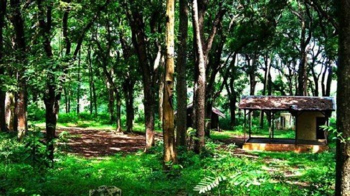 Hutan Bromo Delingan, Pilihan Tempat Wisata di Karanganyar yang Asyik Buat Offroad