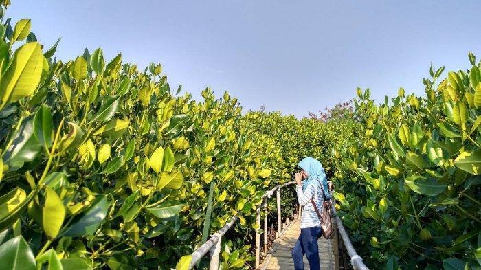 3 Hutan Kota di Semarang, Ada Hutan Mangrove yang Instagramable