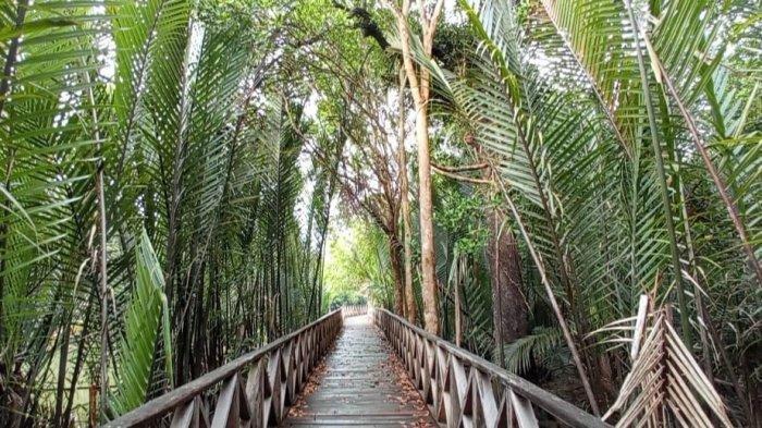 TRAVEL UPDATE: Jelajah Hutan Mangrove Ardi Mulyo, Tempat Wisata Asyik di Kalimantan Utara