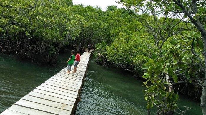 Jelajah Hutan Mangrove Lirang, Surga Tersembunyi di Bitung Sulawesi Utara
