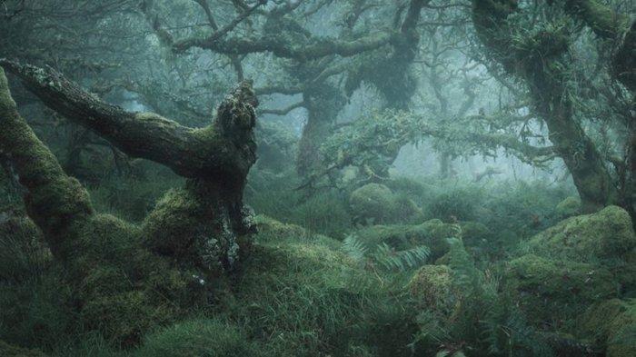 Viral di Medsos, Pohon Ini Selalu 'Muntahkan' Air Tiap Kali Hujan