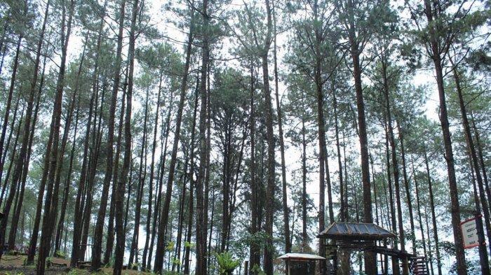 Ada Air Terjun dan Hutan Instagramable, Ini 5 Tempat Wisata di Purworejo