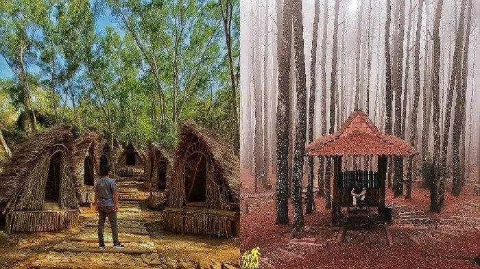 Kebun Pinus Mangunan