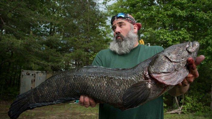 5 Ikan Air Tawar Paling Berbahaya di Dunia, Mulai dari Aligator Gar sampai Ikan Kepala Ular