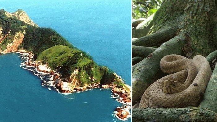 Ilha de Queimada Grande, Pulau Paling Berbahaya di Dunia yang Dihuni Ribuan Ular Mematikan