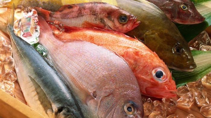 India Punya Tradisi Telan Ikan Hidup yang Dianggap Mampu Sembuhkan Penyakit
