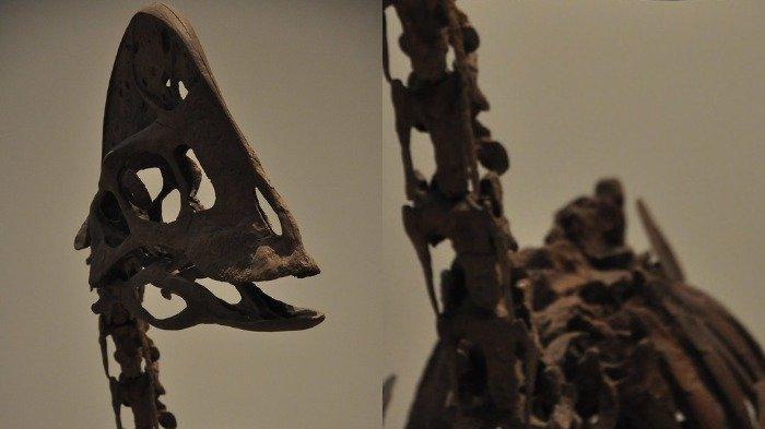 Pertama Kali di Dunia, Fosil Langka Dinosaurus yang Erami Telurnya Ditemukan di China
