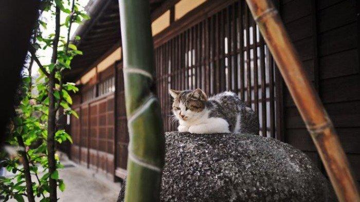 Hotel Ini TawarkanPengalaman Unik, Bisa Foto dan Menginap Bareng Kucing
