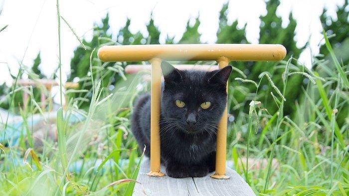 8 Pulau Unik di Dunia yang Hanya Dihuni Binatang, Ada Ratusan Kucing di Tashirojima