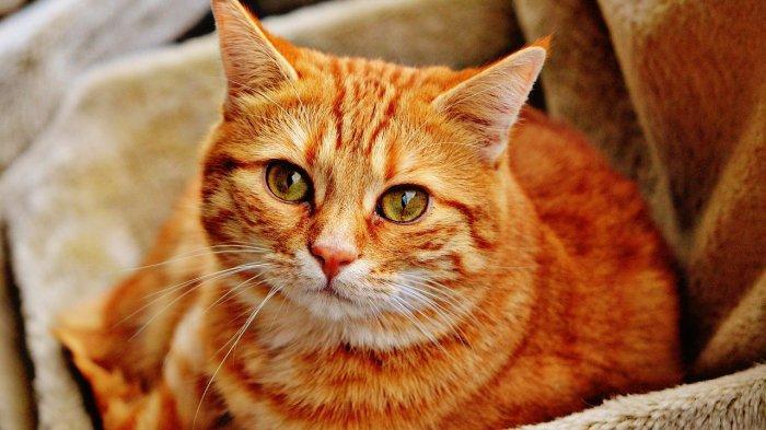 TRAVEL UPDATE: Aksi Heroik Pria Ini Berhasil Selamatkan 4 Kucing dari Kapal Tenggelam yang Terbakar
