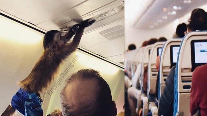 Viral di Medsos, Seekor Monyet Berada di Sebuah Penerbangan
