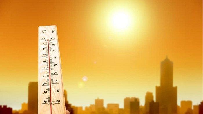 Gelombang Panas Landa Eropa, Suhu di Belanda, Belgia, dan Jerman Tembus 40 derajat Celsius