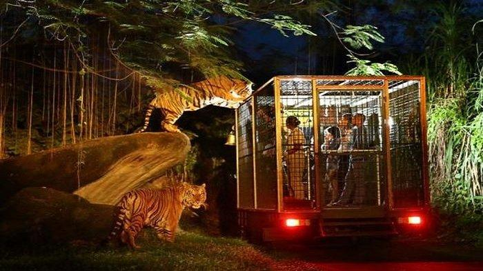 Ilustrasi night safari atau safari malam di Taman Safari Bogor
