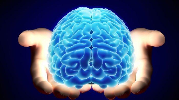 4 Hal-Hal Paling Aneh yang Ternyata Pernah Dicuri Orang, Ada Otak Einstein hingga Satu Set Jembatan