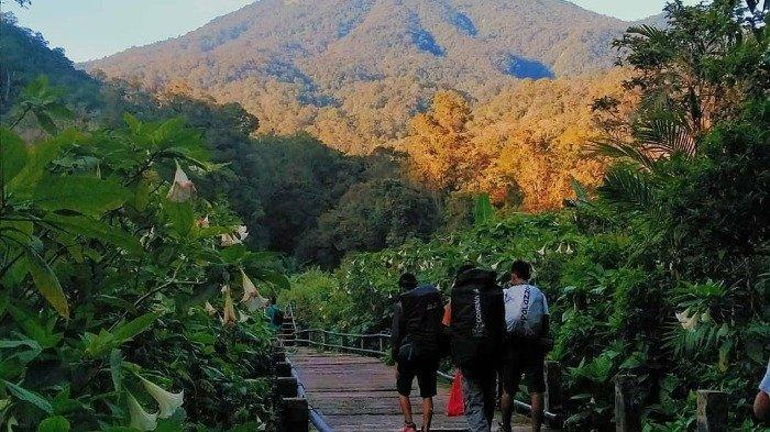 Harga Tiket Mendaki Gunung Gede Pangrango yang Sudah Dibuka Kembali