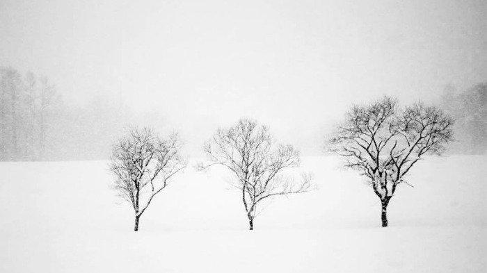 Viral di Medsos, Pemandangan Musim Salju di Jepang yang Mirip Negeri Dongeng