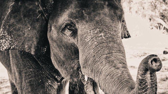 Viral di Twitter, Perpisahan Penuh Air Mata Penjaga Hutan Kepada Gajah yang Dirawatnya