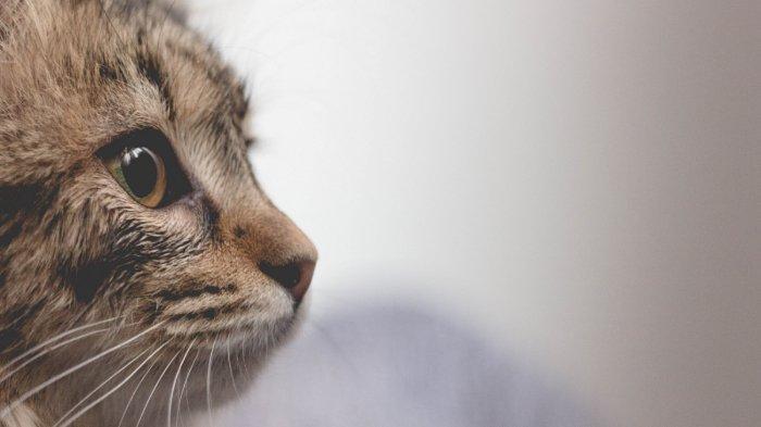 Punya Insting Lebih Tajam dari Manusia, 5 Hewan Ini Bisa Mendeteksi Bencana Alam
