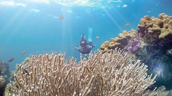Pulau Badalu Tawarkan Sensasi Berenang Bareng Anemon dan Ikan Badut, Mau Coba?