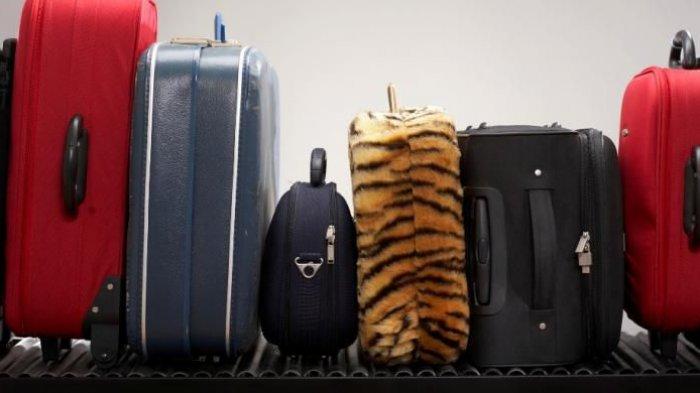 Tips Traveling - Pilih Ini Itu Takut Salah? Yuk Simak Cara Jitu Seleksi Koper yang Berkualitas