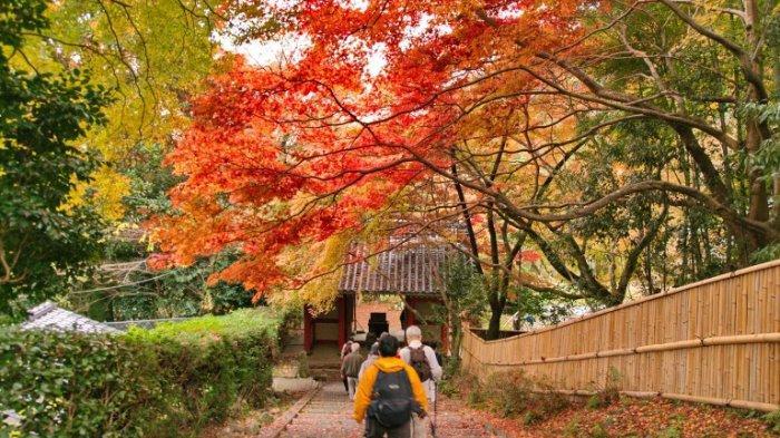 Tempat dan Waktu Terbaik Menikmati Musim Gugur di Jepang