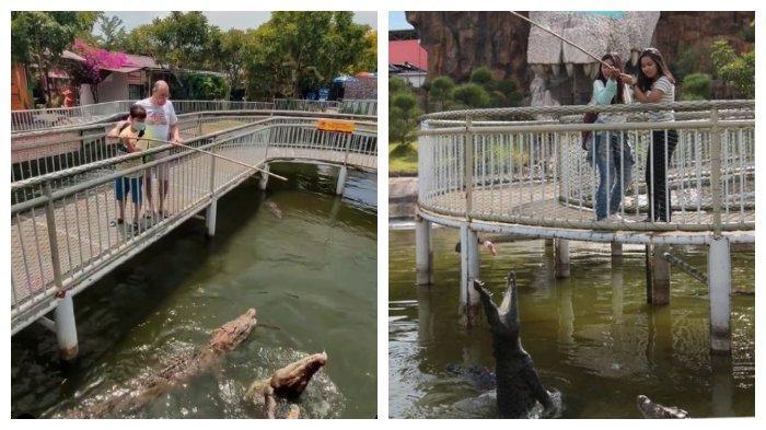 Harga Tiket Masuk Predator Fun Park 2021, Coba Sensasi Menegangkan Beri Makan Buaya di Kolam